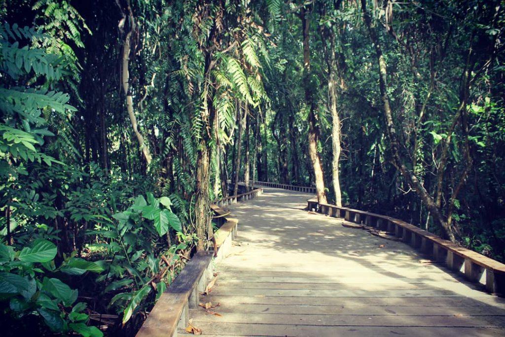 Drum frumos, cu junglă