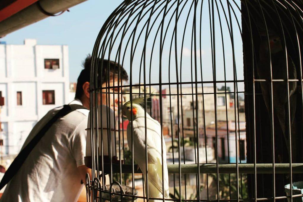 Terasa hostelului, cu papagali și balansoare