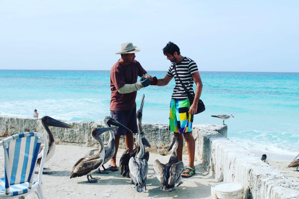 În Varadero, Răzvan se joacă cu pelicanii