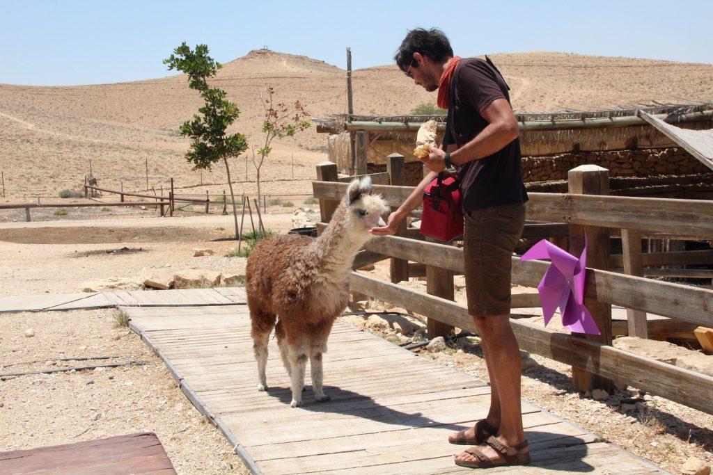O alpaca și un Răzvan