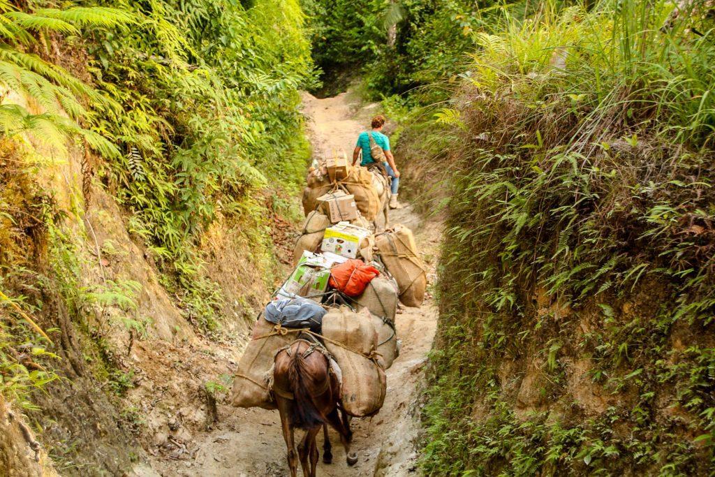 Măgărușii transportă ingredintele pentru mesele noastre de pe traseu.