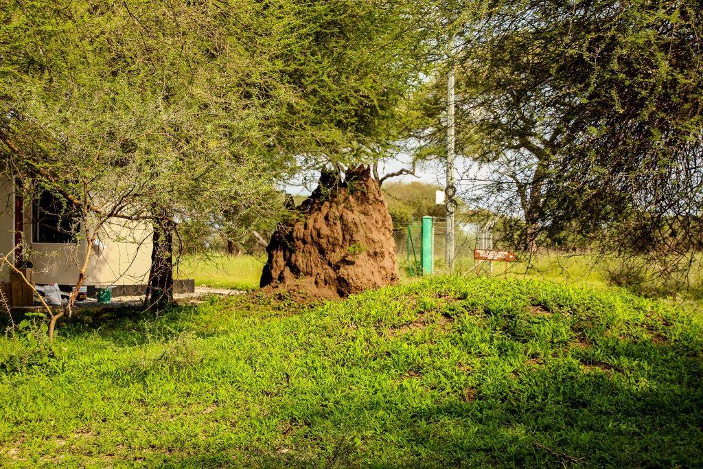Construcțiile termitelor