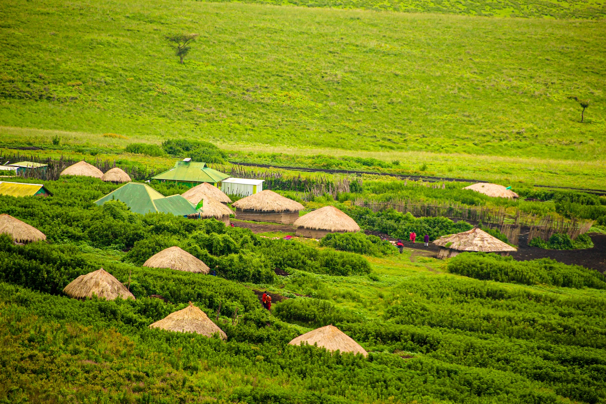 Satele de masai din Ngorngoro
