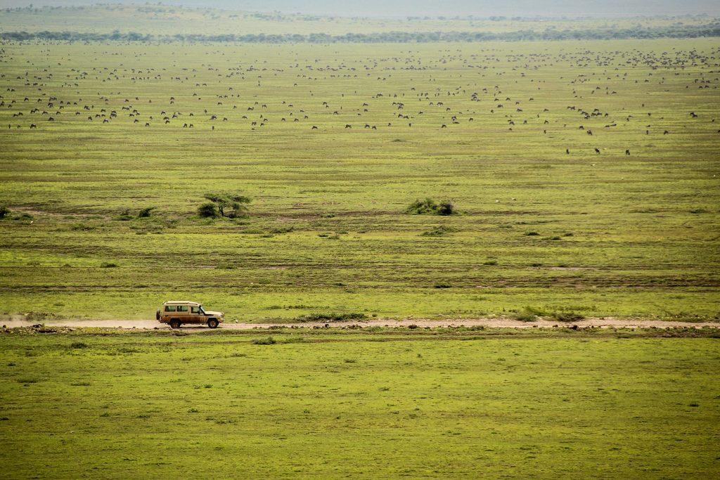 Antilope gnu în Serengeti