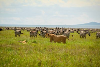 Parcul Național Serengeti