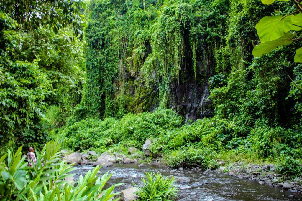 Mult verde în zona Kilimanjaro
