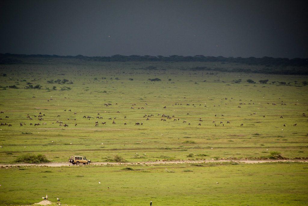 Furtuna în Serengeti